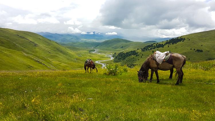 Tagong-tibet-paarden