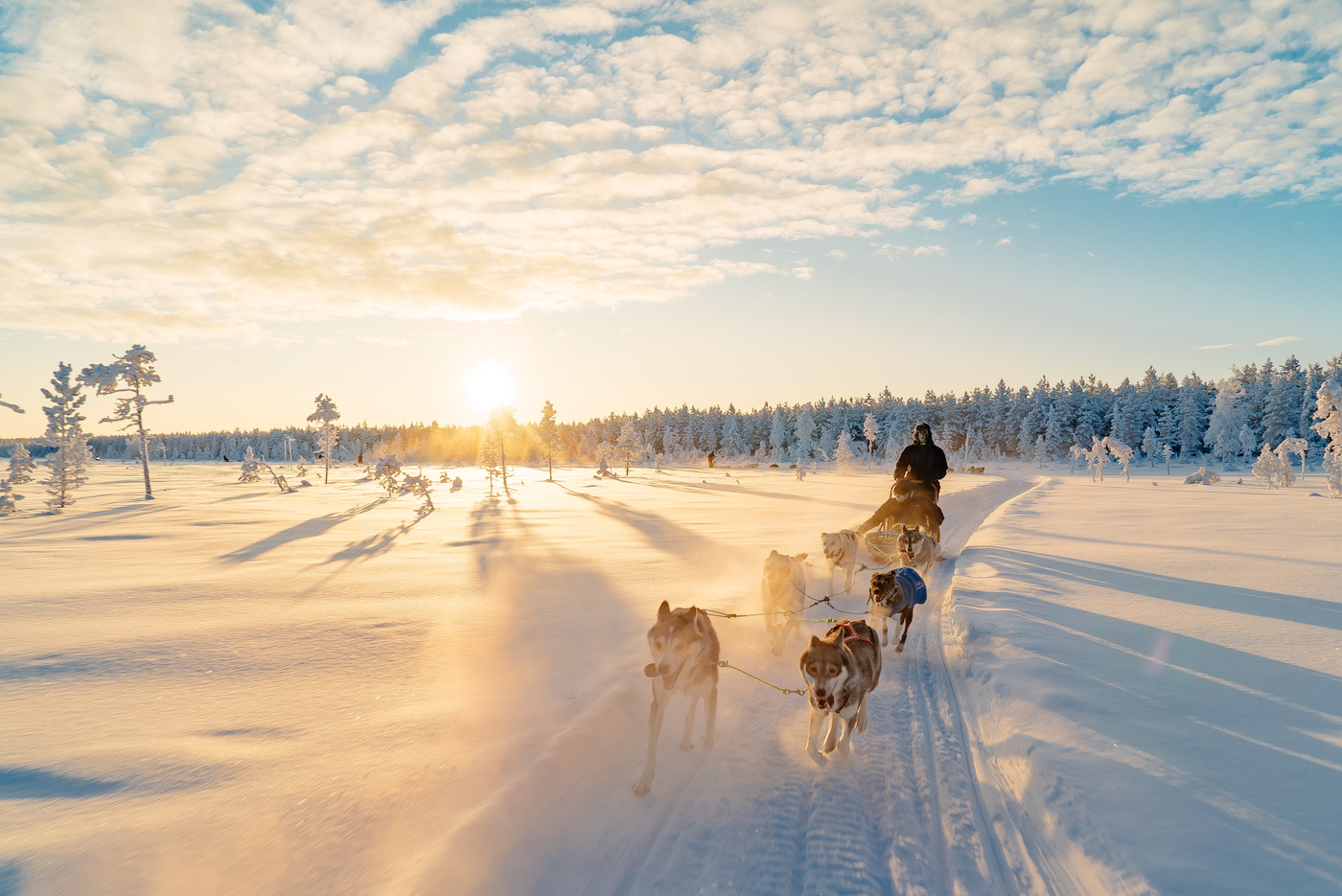 The Lapland Trip husky tocht