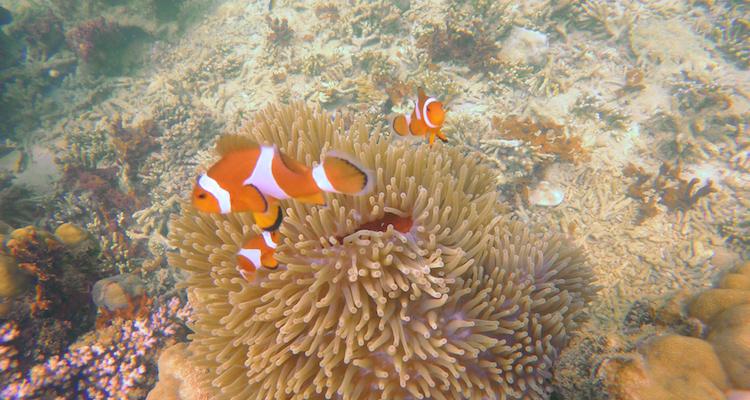 Tips Nusa eilanden bali Mangrove Point