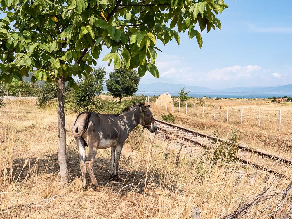 Tips Roadtrip Albanie Donkey