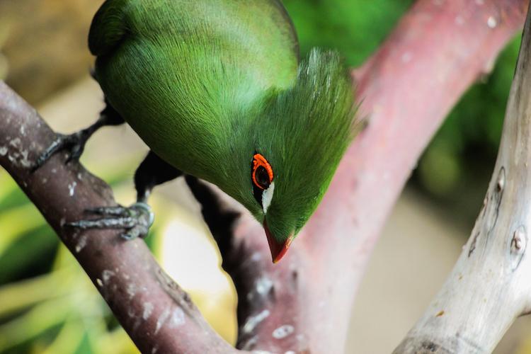 tips-fotos-maken-op-reis-vogel-detail-joffreslake-1