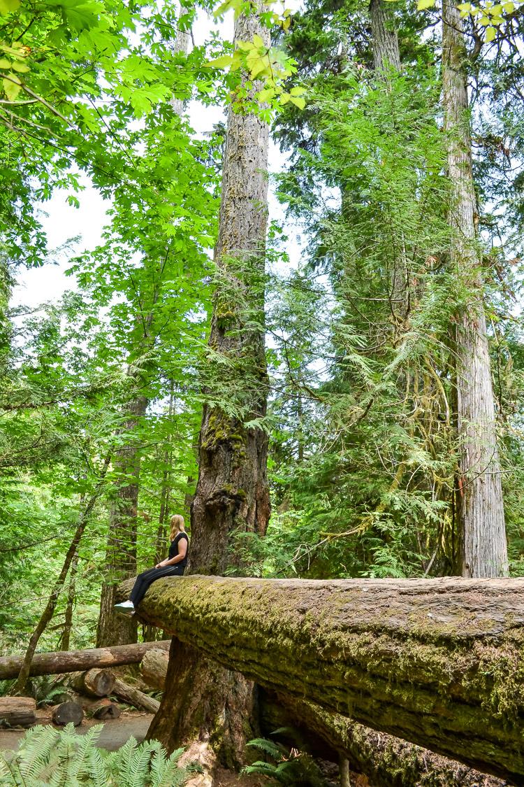 Tofino Ucluelet Vancouver Island