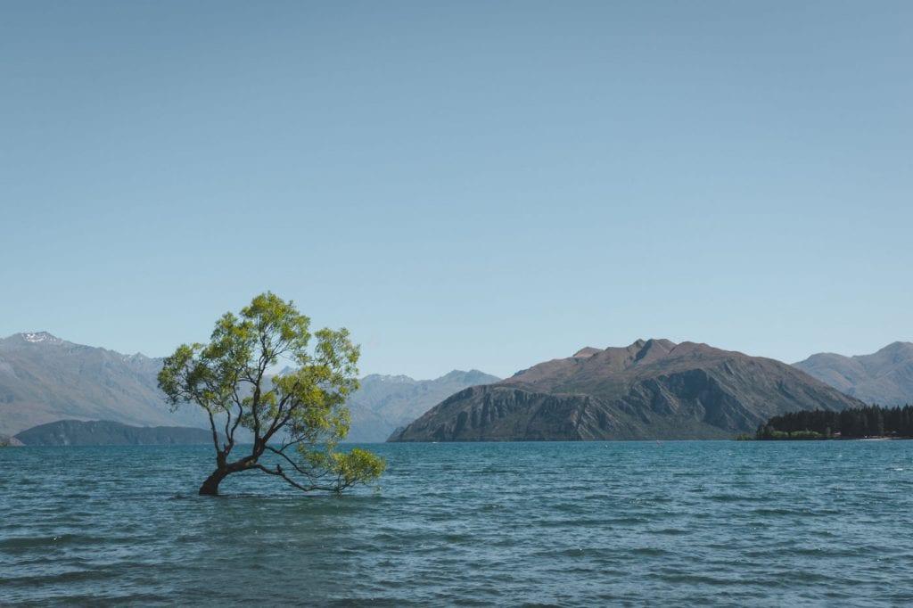 Top 10 Nieuw Zeeland Zuidereiland Wanaka Tree