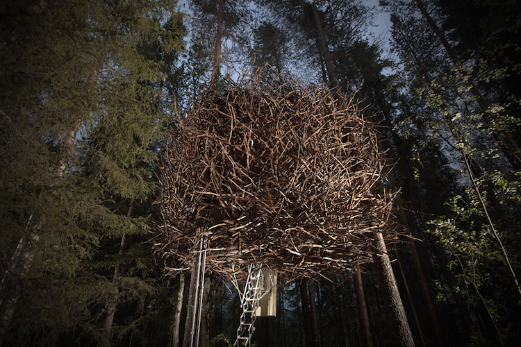 Treehotel zweden The Birds Nest