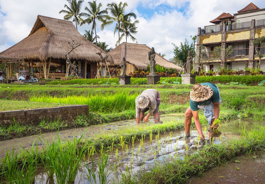 Ubud rijstvelden bij Visesa Ubud