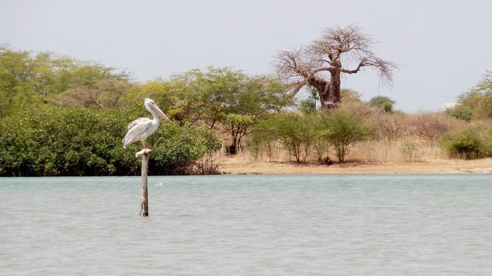 Vakantie Senegal Lagune Somone