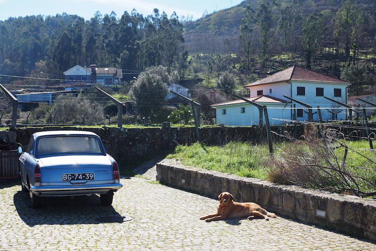 vakantie noord portugal Vale dos Ares wijngaard