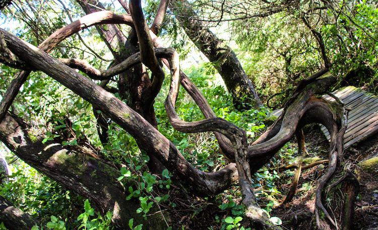 Vancouver Island natuur