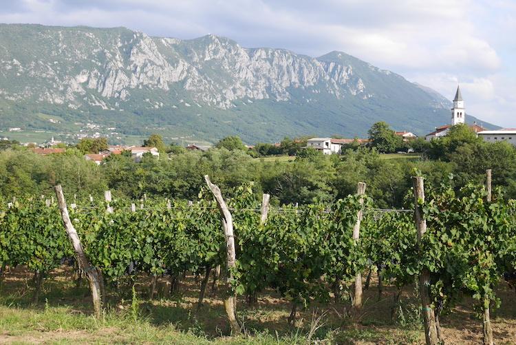 Vipava valley slovenie