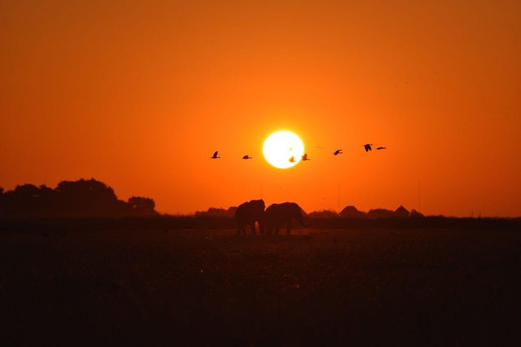 Vogels olifanten zonsondergang botswana backpack avontuur