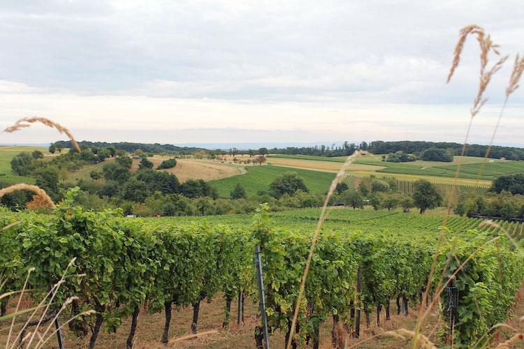 vogezen-frankrijk-uitzicht