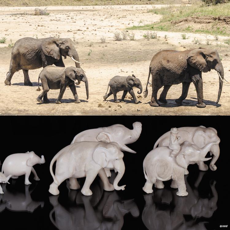 WNF-olifanten en ivoor met credits