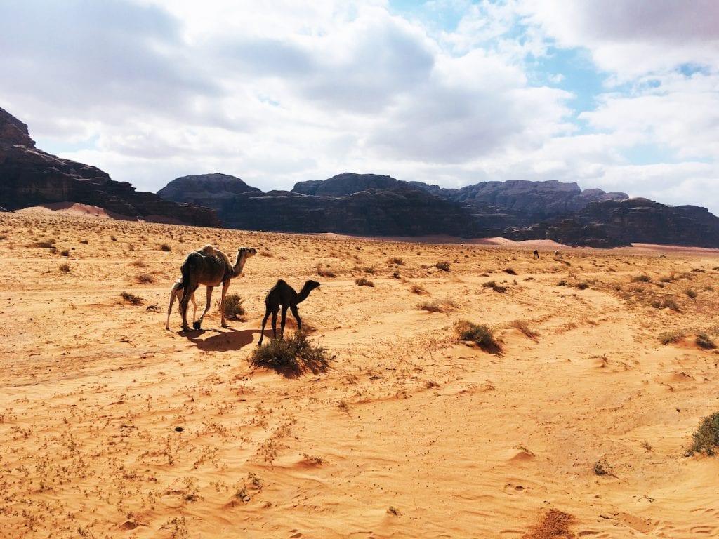 Wadi rum kamelen rit jordanie