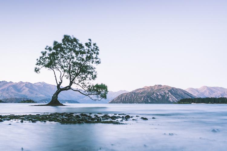 Wanaka-Tree-in-Nieuw-Zeeland-fotospot-WeAreTravellers-Yannick-De-Pauw