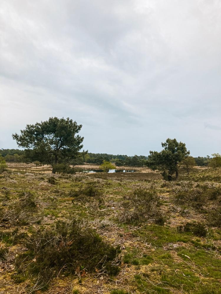 Wandelen Nationaal Park De Maasduinen limburg