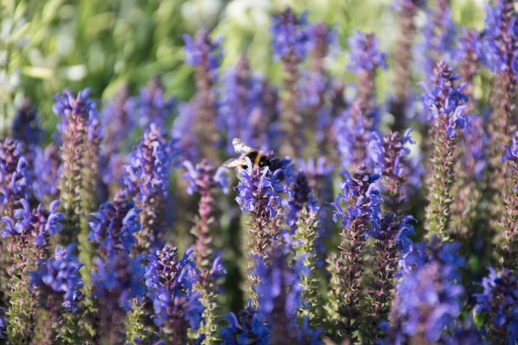 Wat te doen in Christchurch Nieuw Zeeland Botanische tuin