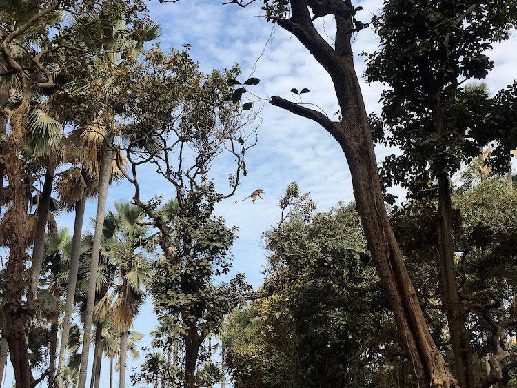 Wat te doen in Gambia Monkey Park vliegende aap