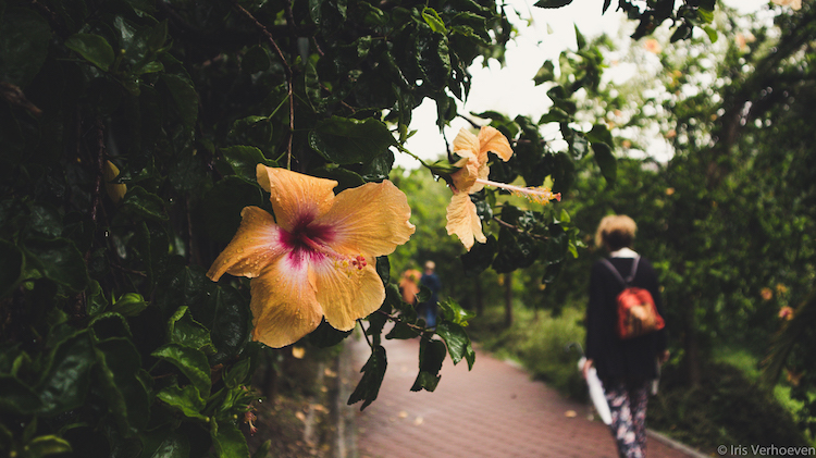 Wat te doen in Malaga botanische tuin