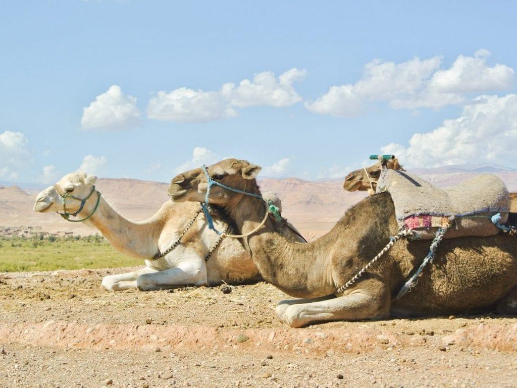 Wat te doen in Marrakech tips kamelentocht woestijn