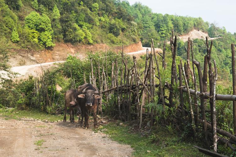 Wat te doen in Pokhara ondereweg hike nepal