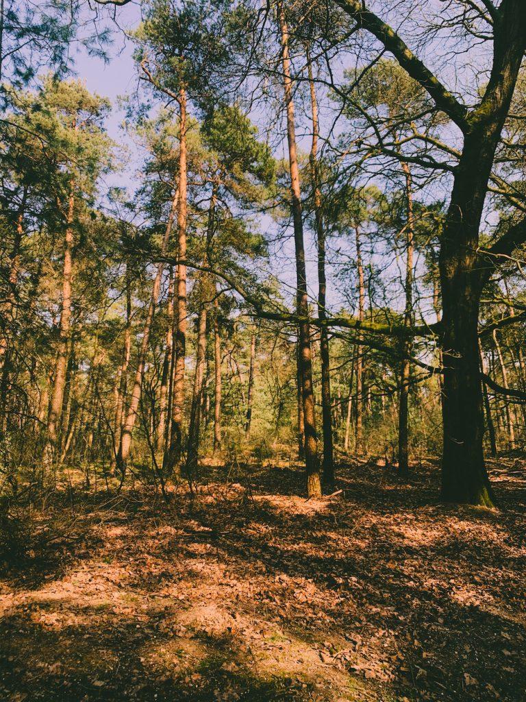 Wat te doen in apeldoorn bos