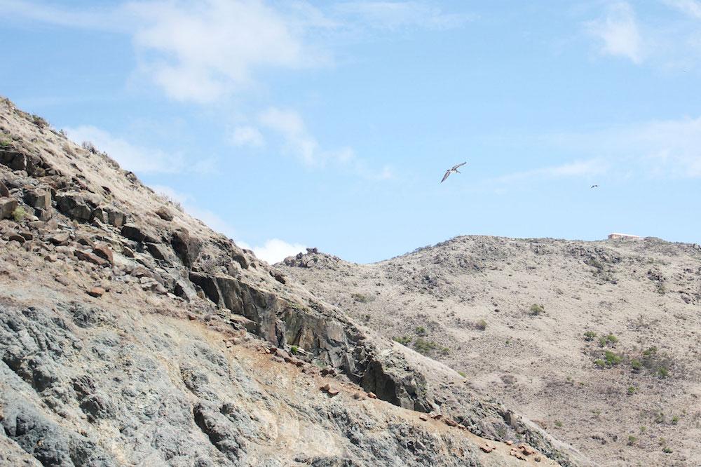 Wat te doen op Sint-Maarten activiteiten Point Blanche vogels