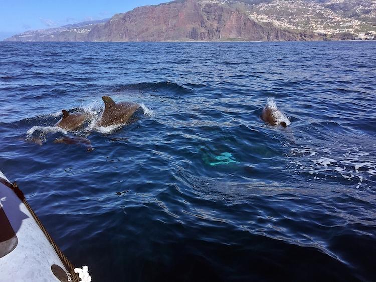 Wat te doen op madeira Dolfijnen spotten