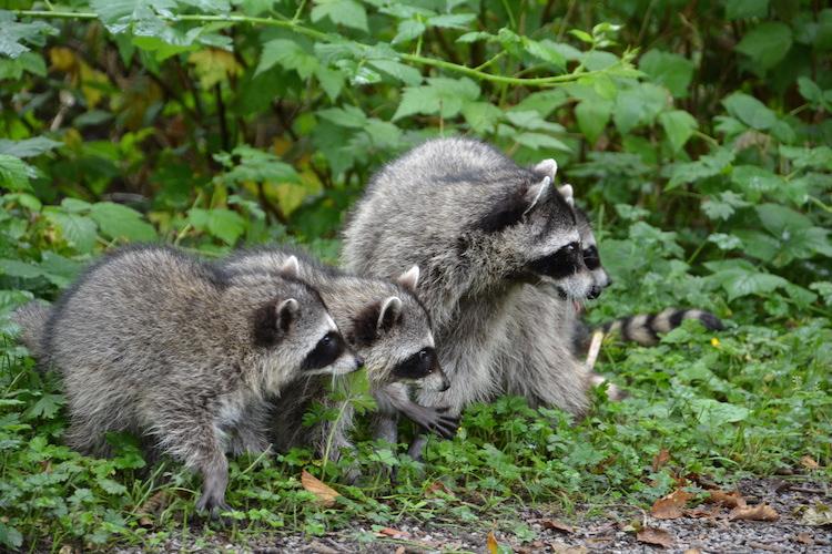 West Canada rondreis wildlife