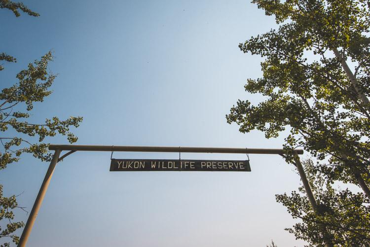 Whitehorse Yukon wildlife preserve