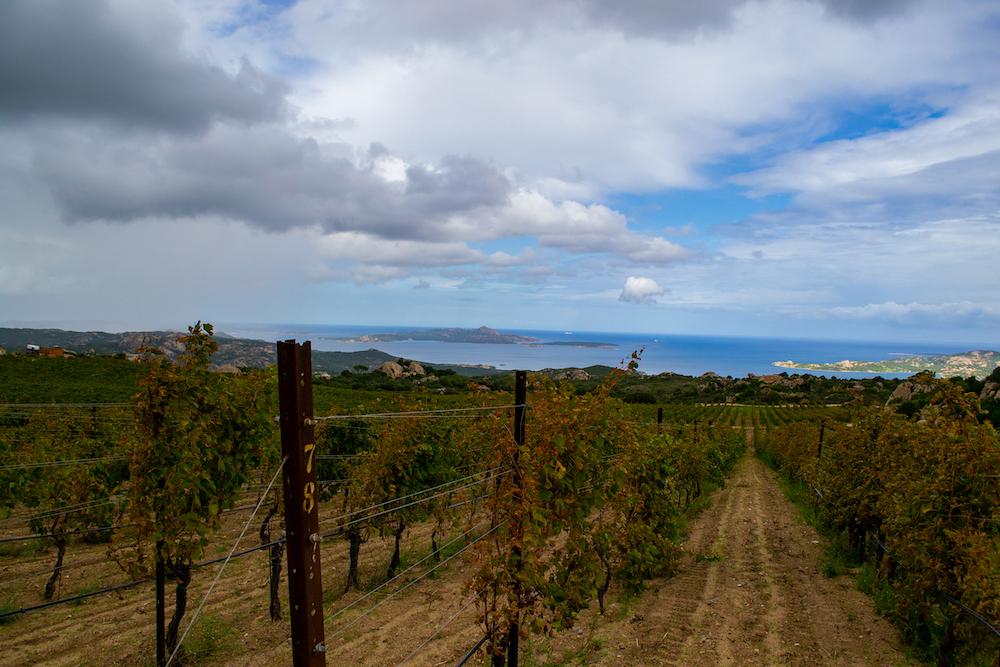 Wijngaard Cantina Ledda noord sardinie tips