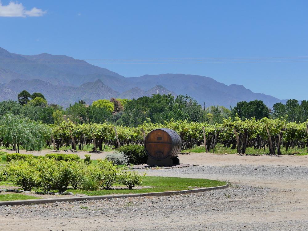 Wijngaard in Salta Argentinië