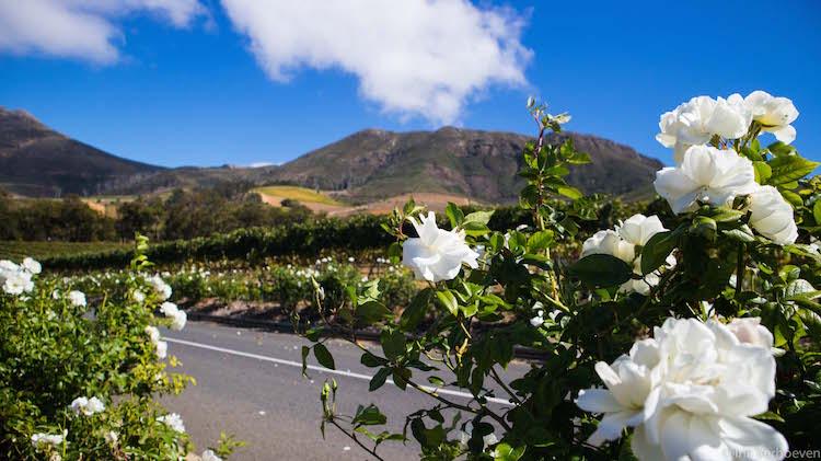 Wijnlanden kaapstad tips constantia