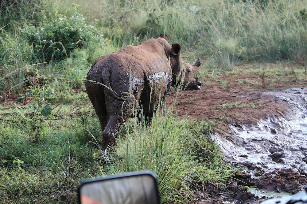 World Rhino Day neushoorn