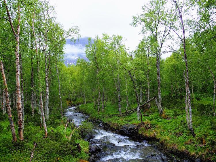 Zomer in lapland hiken bij Ammernäs