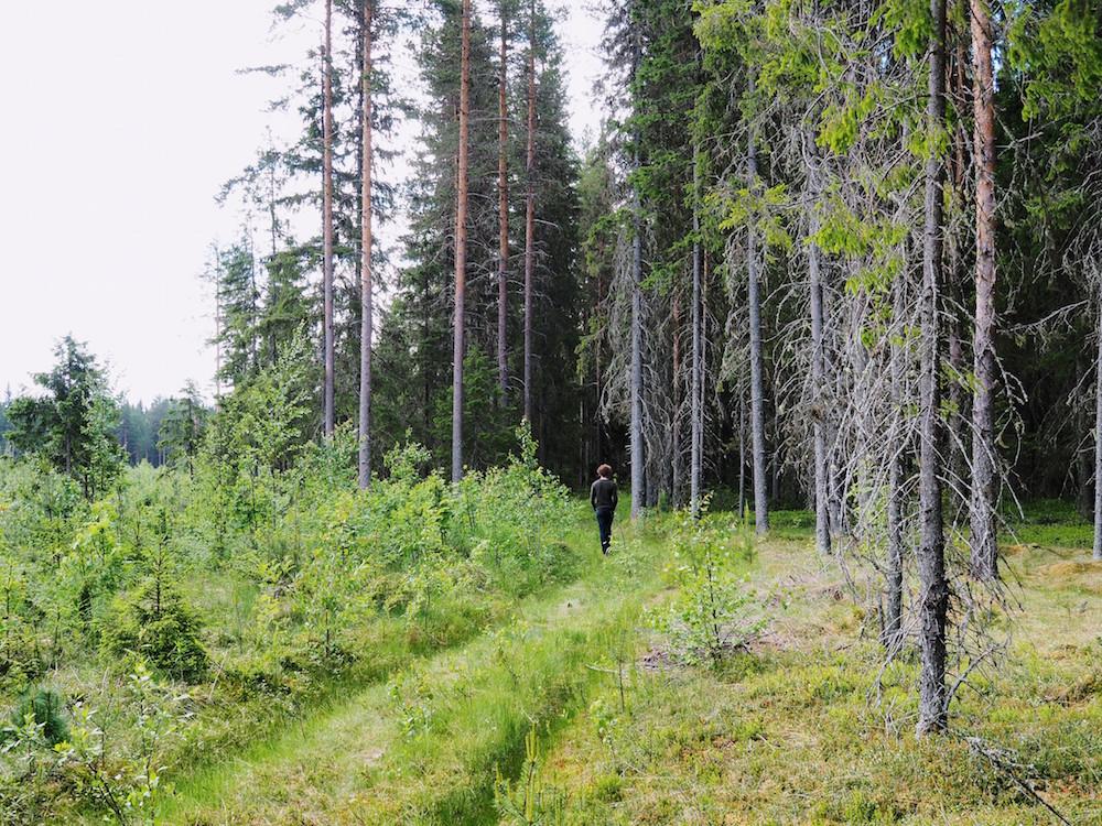 zomer lapland boswandeling