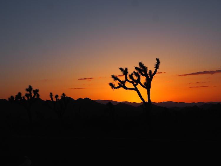 Zonsondergang mojave woestijn joshua tree national park