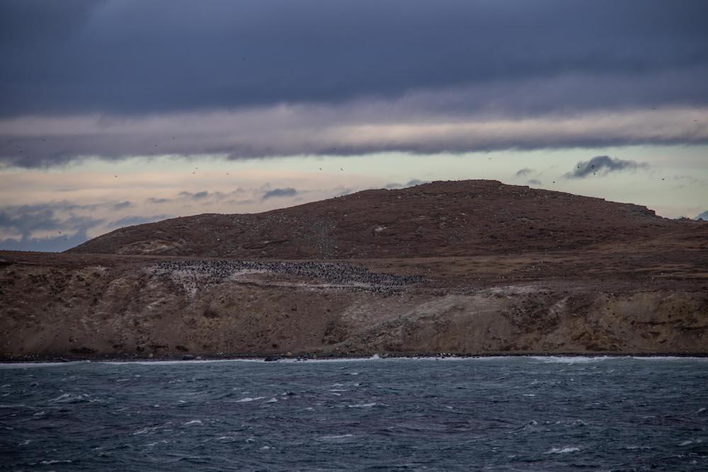 Zuid patagonie magdalena eiland