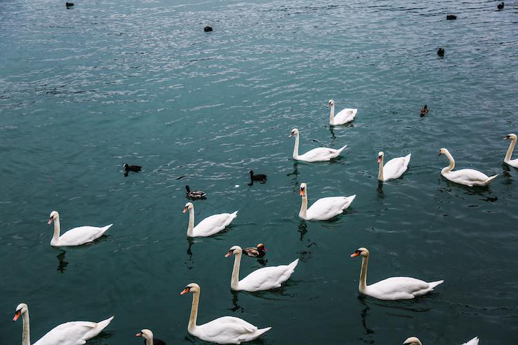 Zurich Wat te doen in Zurich stedentrip zwamen
