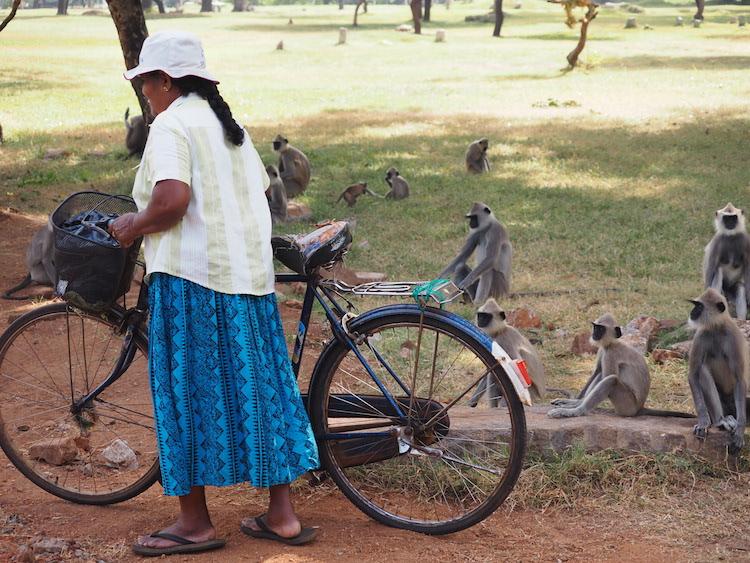 apen-buiten-Ruwanweliseya-anuradhapura