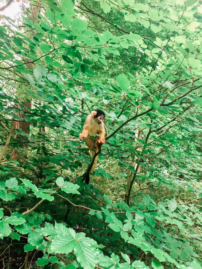 apenheul apeldoorn wat te doen