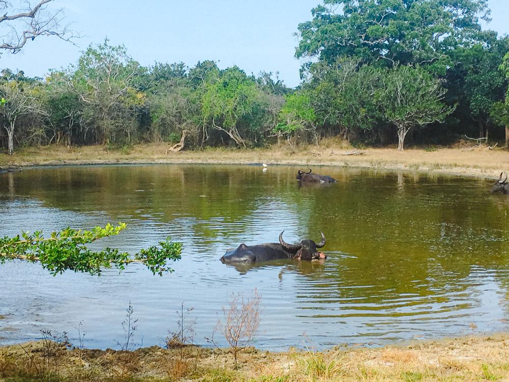 arugam bay sri lanka Kumana National Park-2