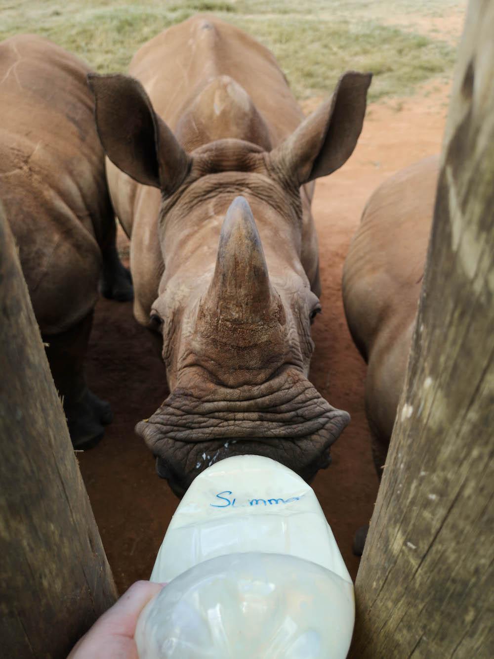 baby neushoorn care for wild rhino sanctuary