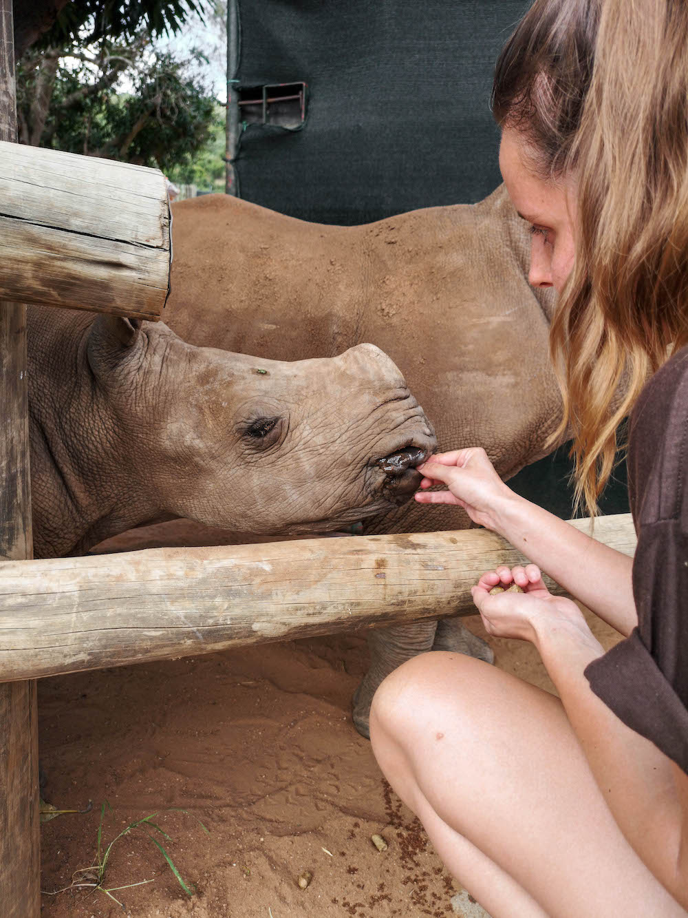 baby neushoorn bij care for wild rhino sanctuary