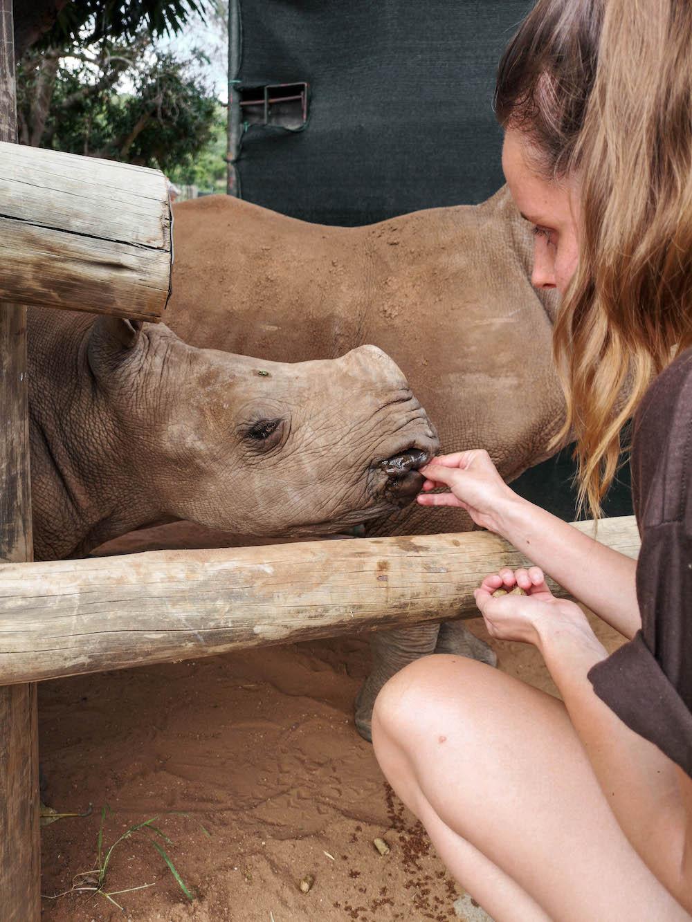 baby neushoorn bij care for wild rhino sanctuary