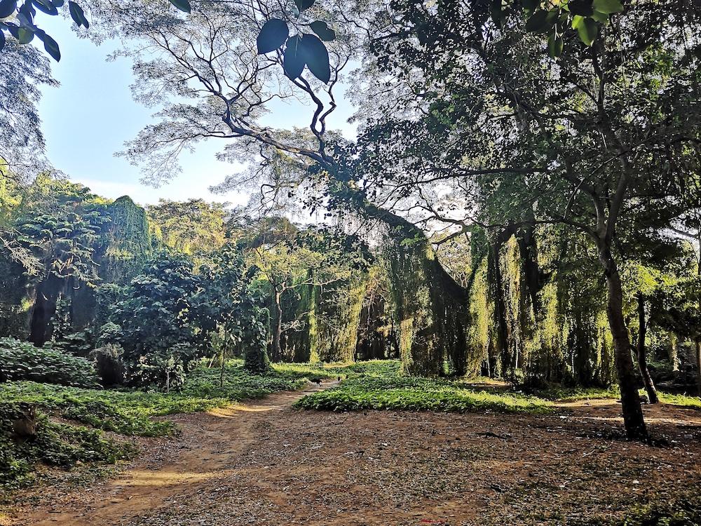 bezienswaardigheden havana bos