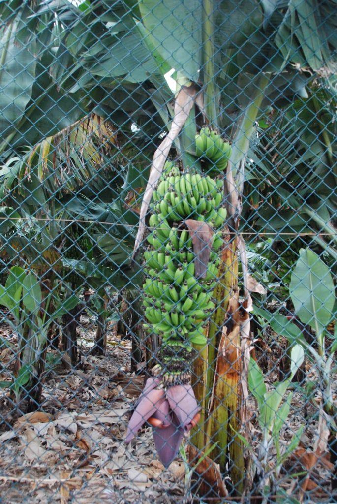 bezienswaardigheden tenerife bananenplantage