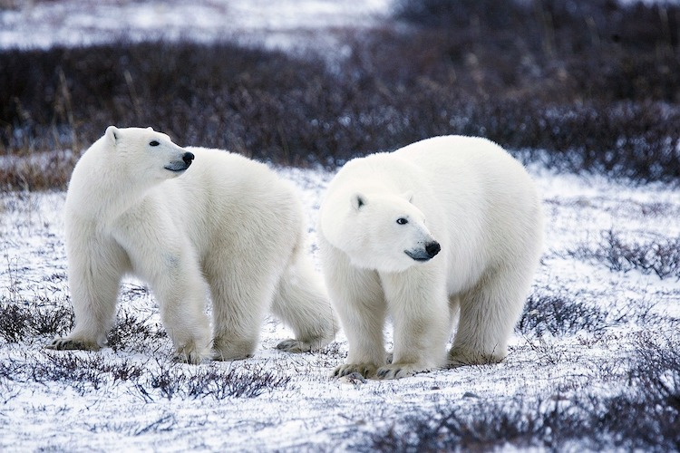 bijzondere vakantiebestemmingen arctisch canada