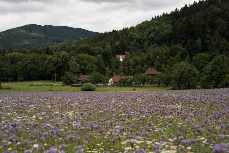 bloemenvelden tsjechië Beskydy Mountains