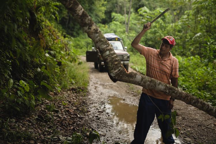 boom over de weg Arturo