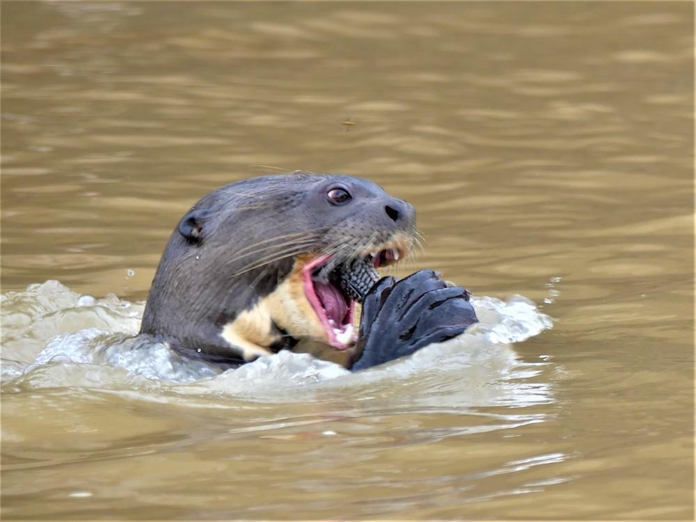 brazilie pantanal dieren